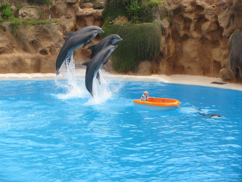 dolphin-pool