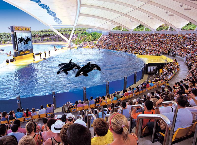 orcas-ocean