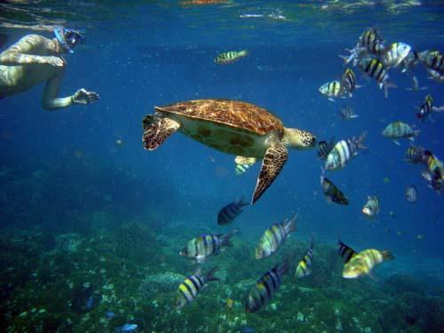Snorkelen-op-Tenerife