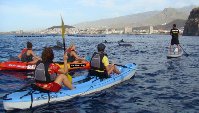 viendo-delfines-en-kayak-y-paddle-650px